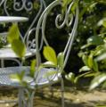 chaises jardin.jpg