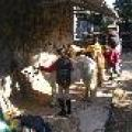 ferme-equestre-et-pedagogique-les-poneys-du-val-d-emeraude-11012_thumb.jpg